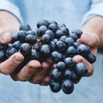 Vinhos produzidos em altitude em Santa Catarina recebem registro de Indicação Geográfica