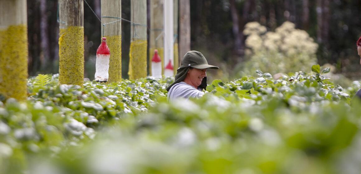 Prêmio Orgulho da Terra cria vitrine para as melhores práticas do agronegócio paranaense