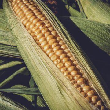 Valor Bruto da Produção Agropecuária de 2021 está estimado em R$ 1,1 trilhão